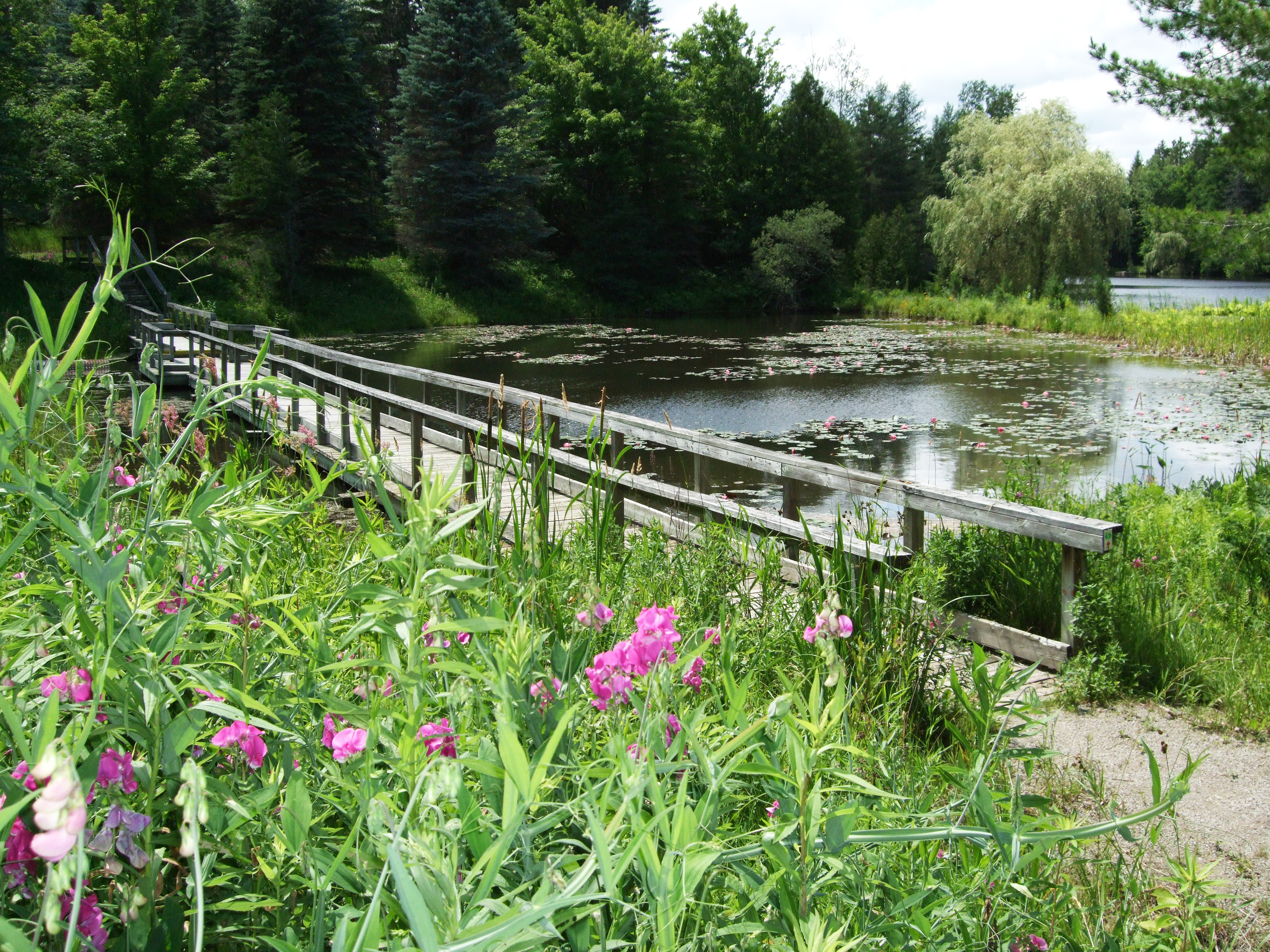 Baby Bear bridge - summer - lg.JPG