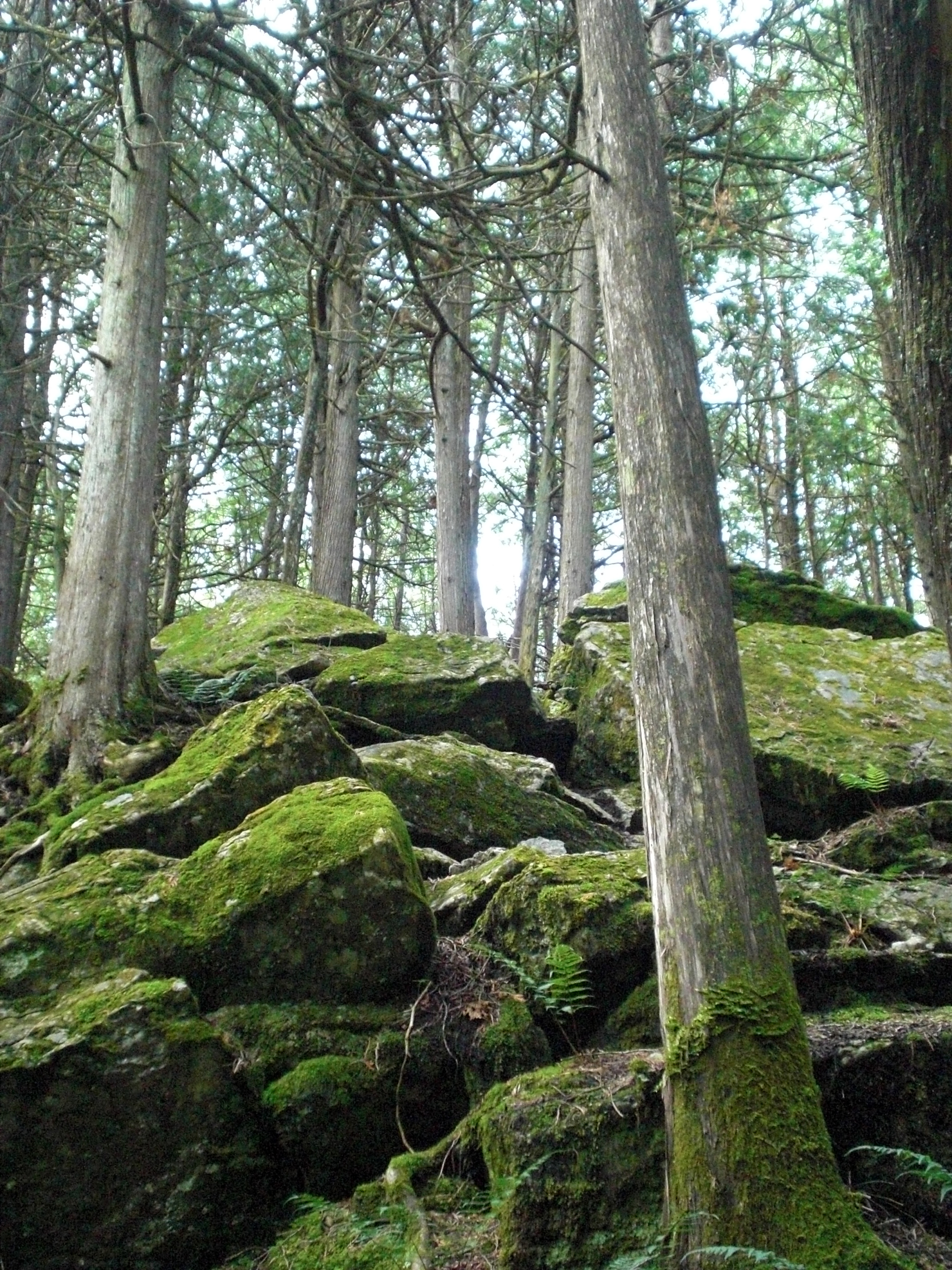 Nottawasaga Bluffs - mossy rocks in the forest at warsaw caves.jpg