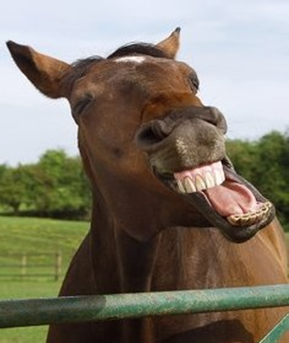 Laughing_Horse.png