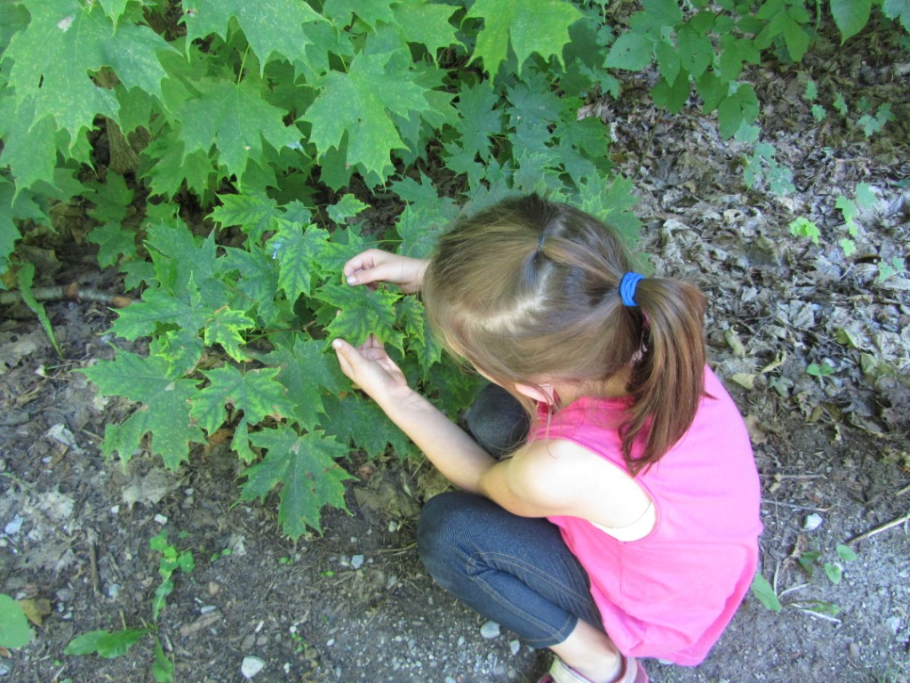 Child investigating a green leaf